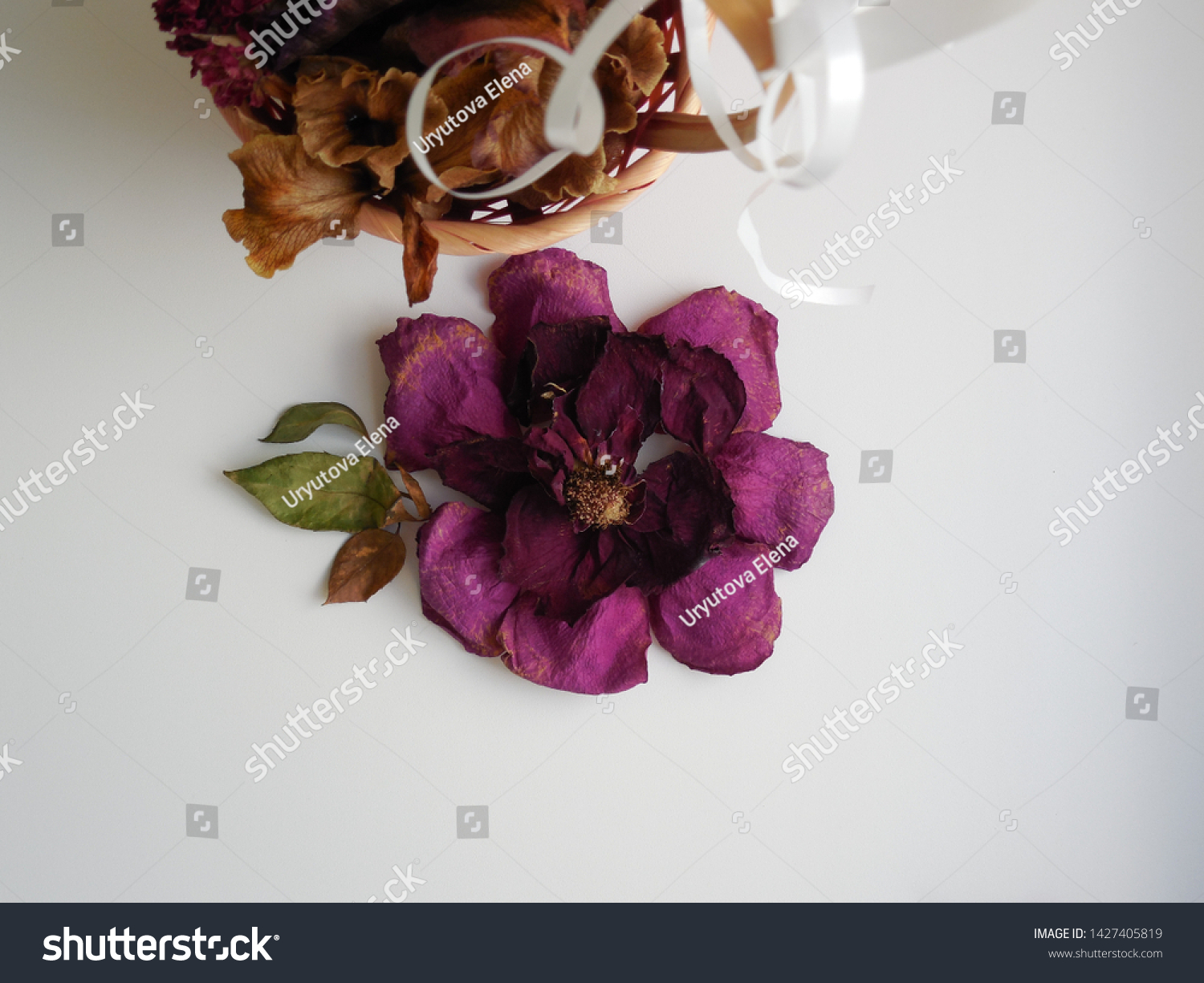 Decorative Flower Dry Burgundy Rose Flower Stock Photo Edit Now 1427405819