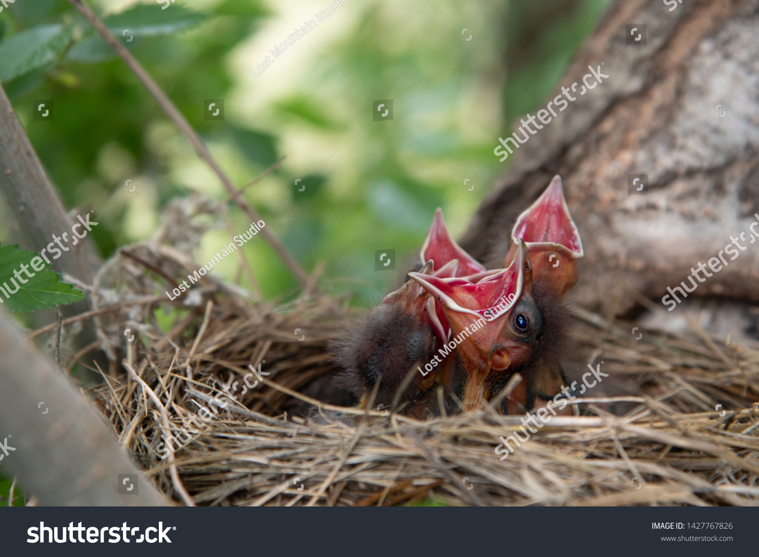 stock-photo-newly-hatched-baby-greckle-b