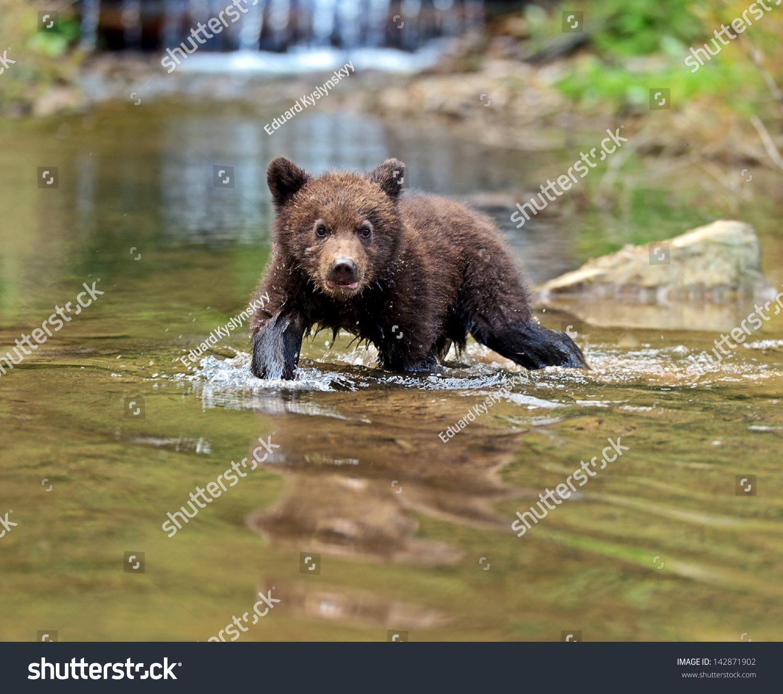 bear natural