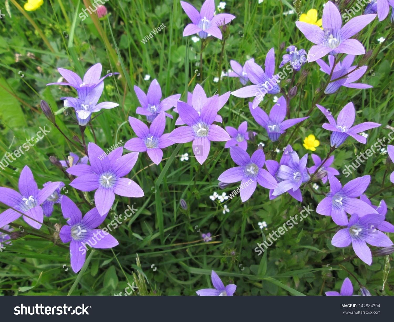 Forest Bells Beautiful Purple Flowers Stock Photo 142884304