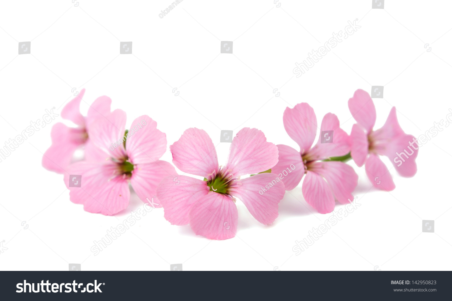 Delicate Pink Flowers On A White Background Ez Canvas