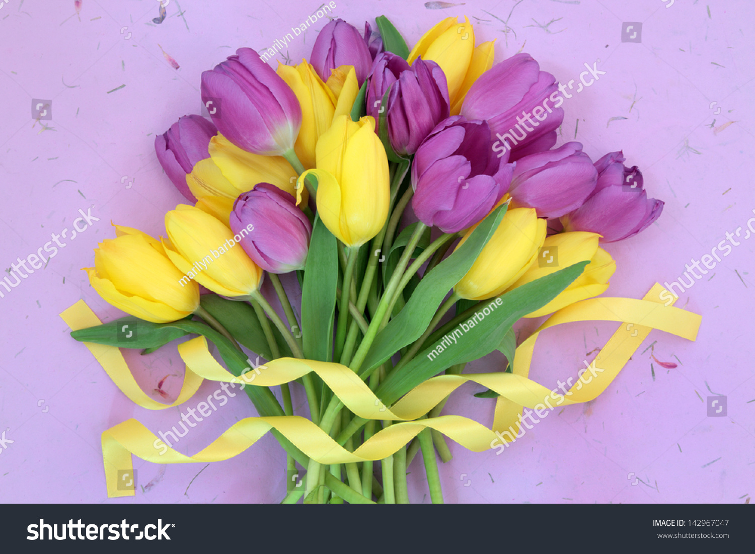 Yellow purple tulip flower bouquet ribbon stock photo royalty free yellow and purple tulip flower bouquet with ribbon over mottled lilac background mightylinksfo