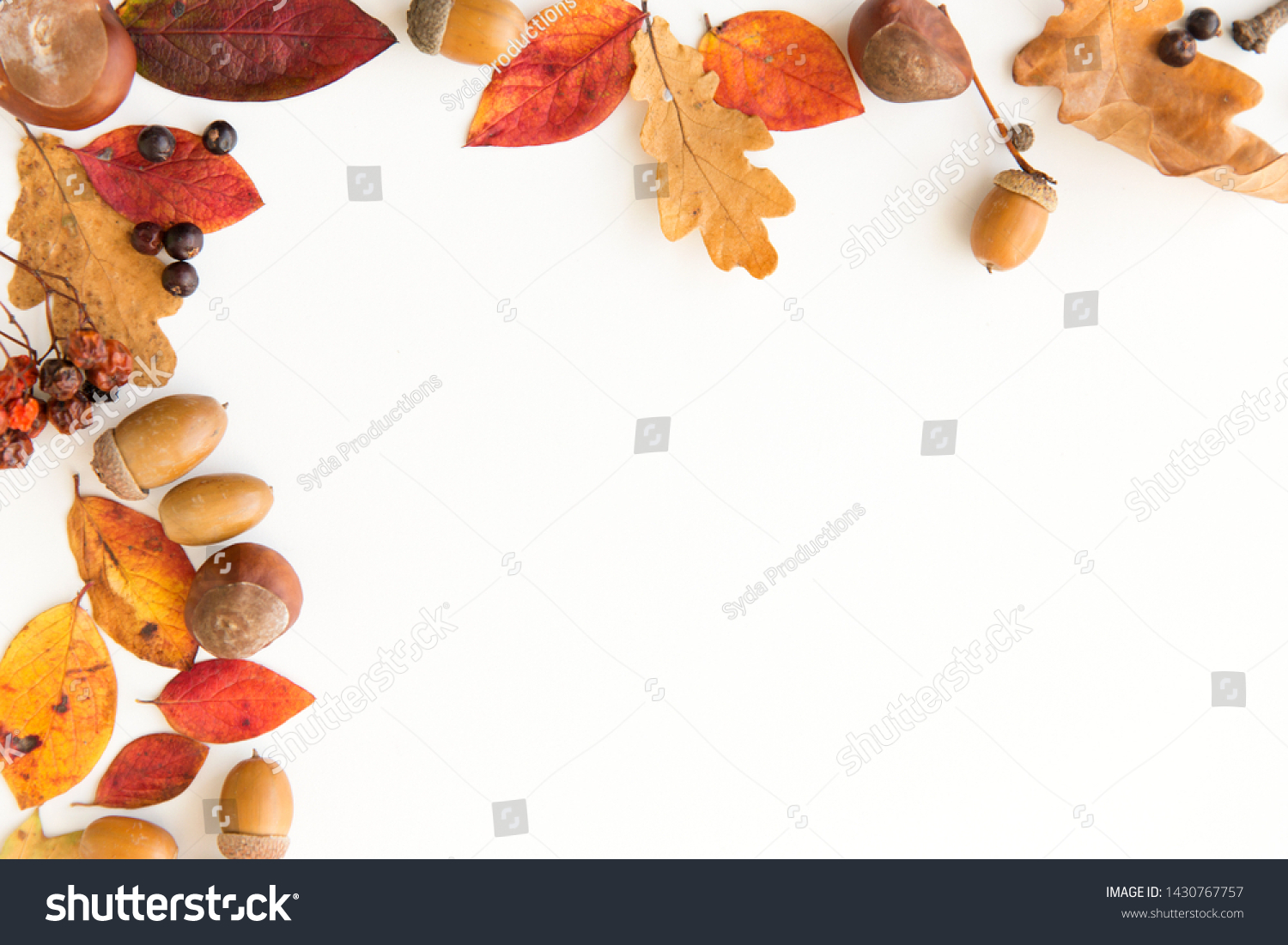 nature, season and botany concept - frame of different dry fallen autumn leaves, chestnuts, acorns and berries on white background #1430767757