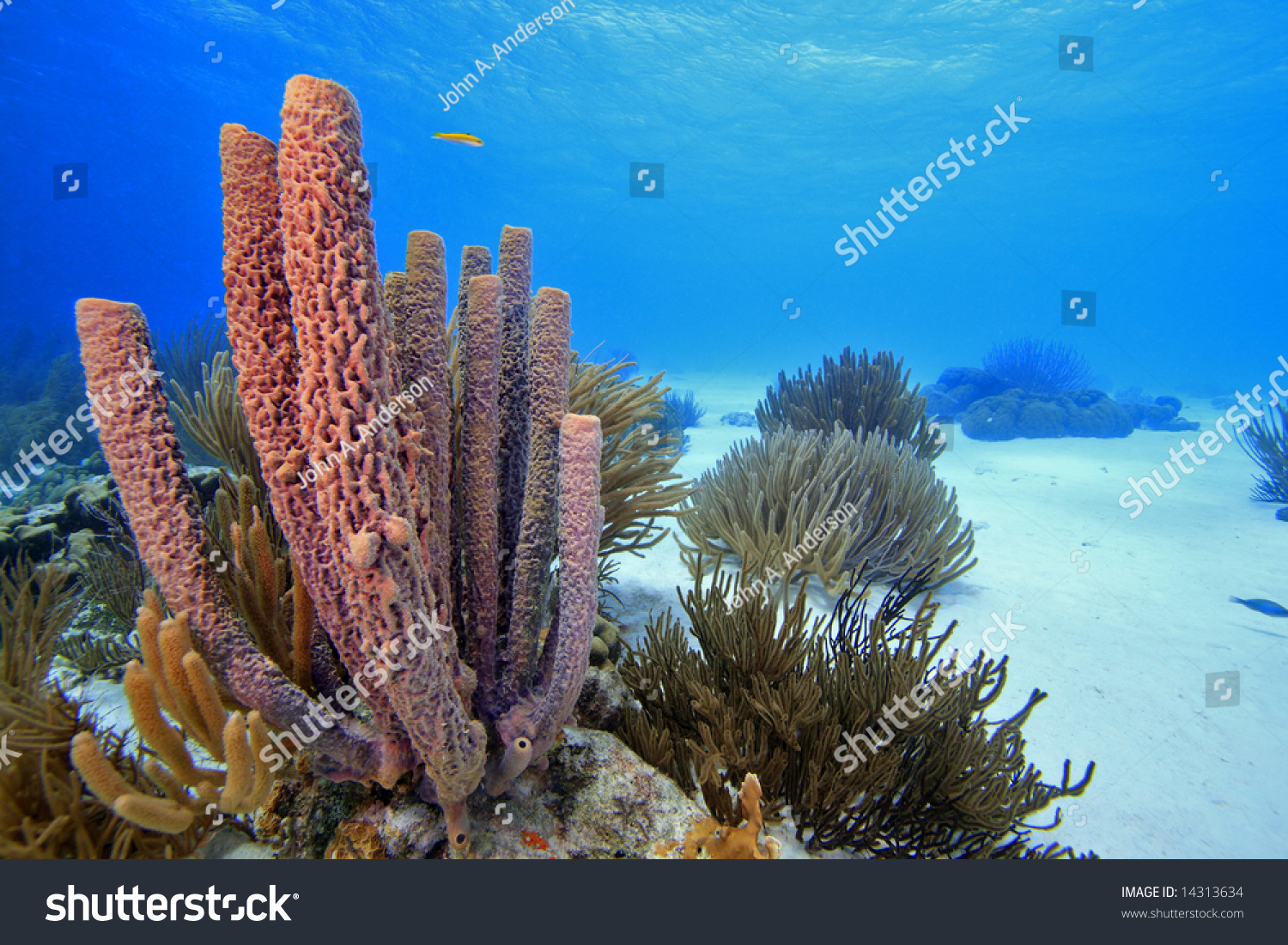 nature coral underwater landscape - photo #41