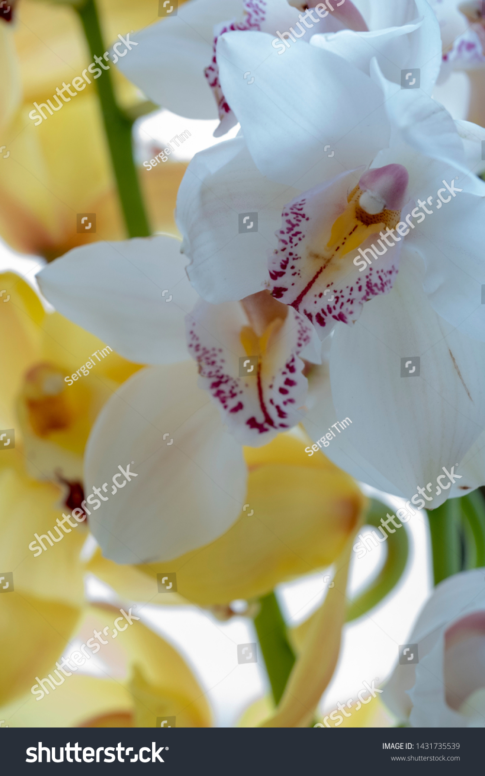 stock-photo-beautiful-white-orchid-flowe