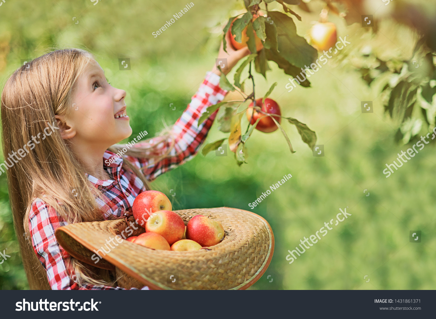 Girl with Apple in the Apple Orchard. Beautiful Girl Eating Organic Apple in the Orchard. Harvest Concept. Garden, Toddler eating fruits at fall harvest. Apple picking. #1431861371