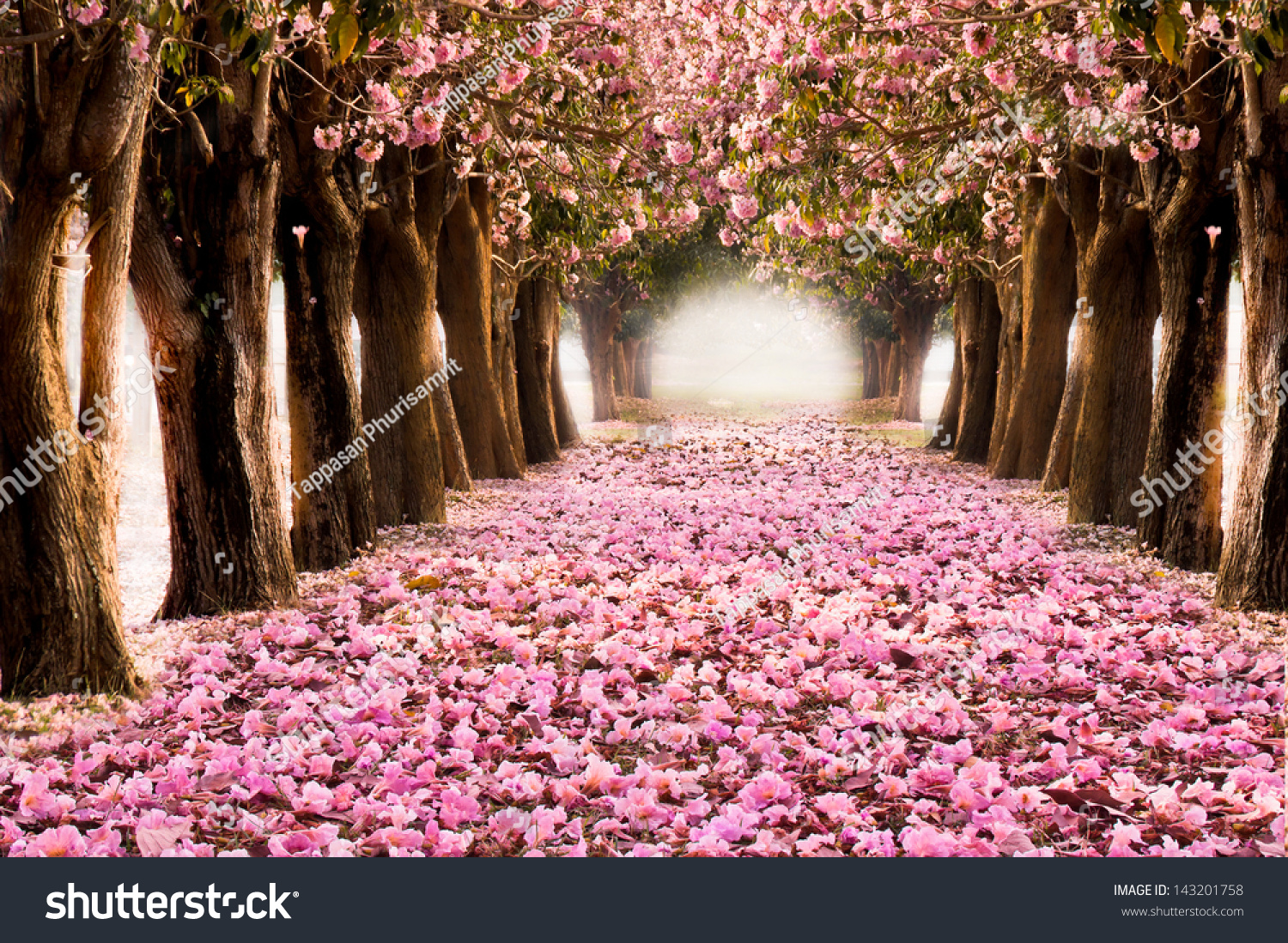 romantic tunnel pink flower trees stock photo 143201758 shutterstock