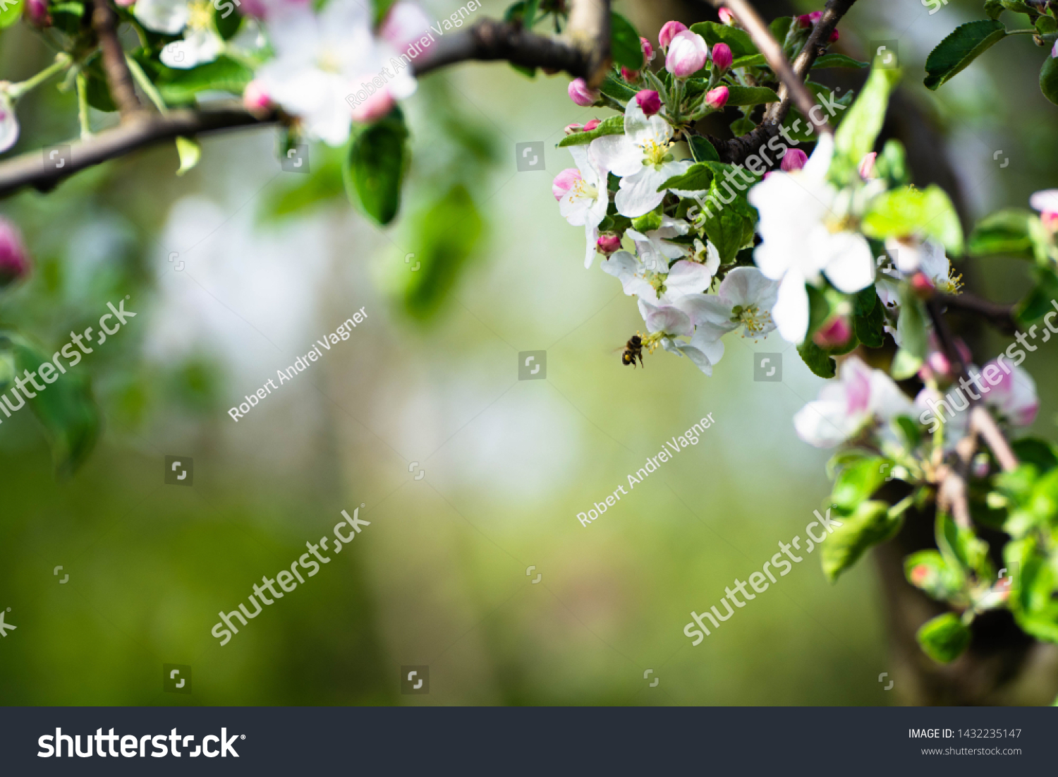 Beauty Nature Floral Desktop Background Blooming Stock Image