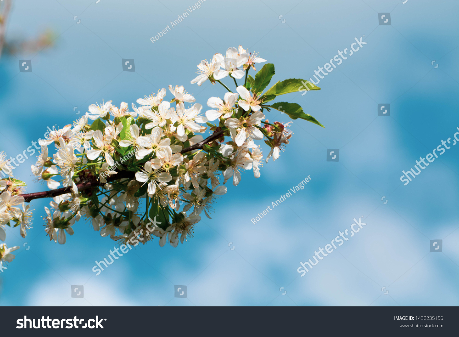 Beauty Nature Floral Desktop Background Blooming Stock Photo Edit