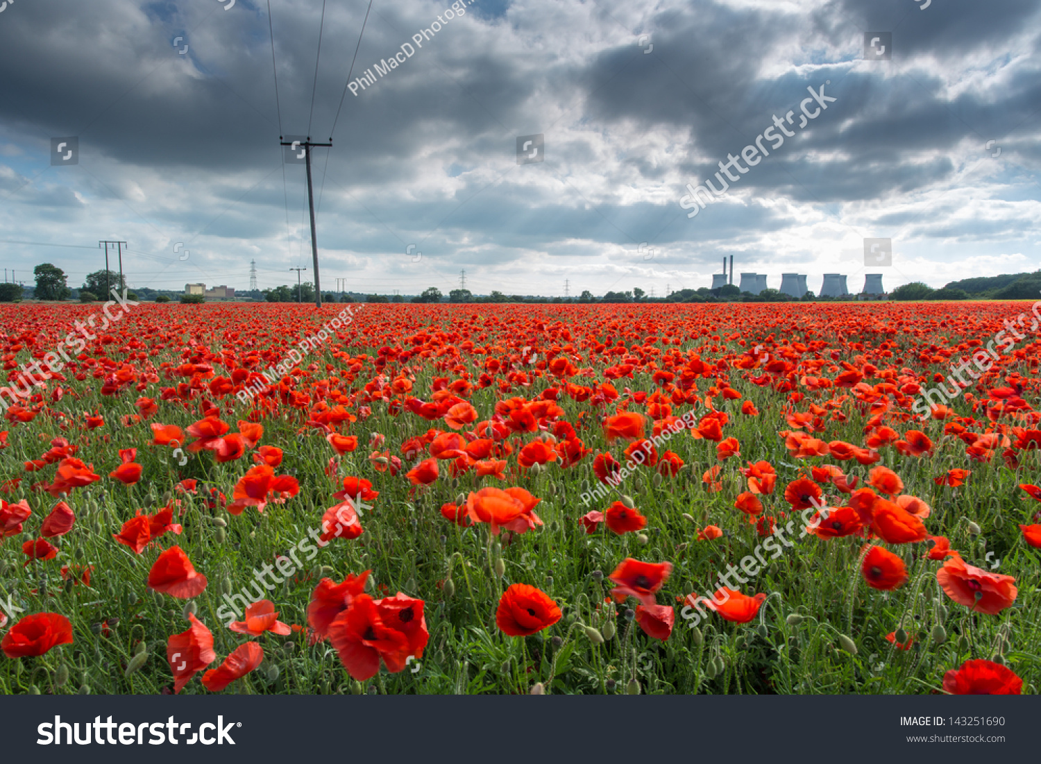 Poppy Power Bright Red Flowers Field Stock Photo Edit Now