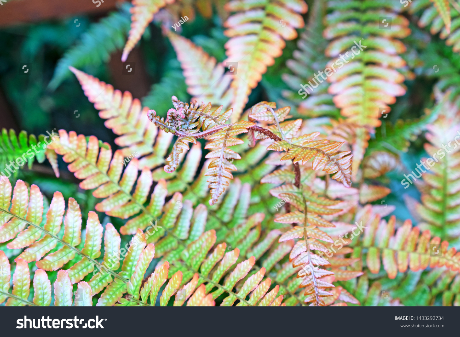 stock-photo-young-shoots-of-copper-shade