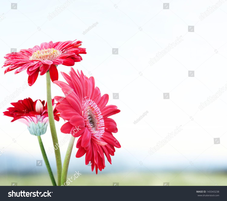 Autumn flower design beautiful floral border stock illustration autumn flower design beautiful floral border izmirmasajfo