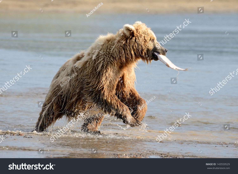 а рыбу медведь ловит так