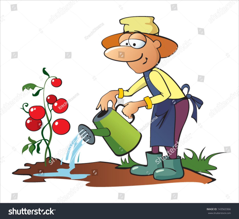 stock vector gardener watering tomatoes