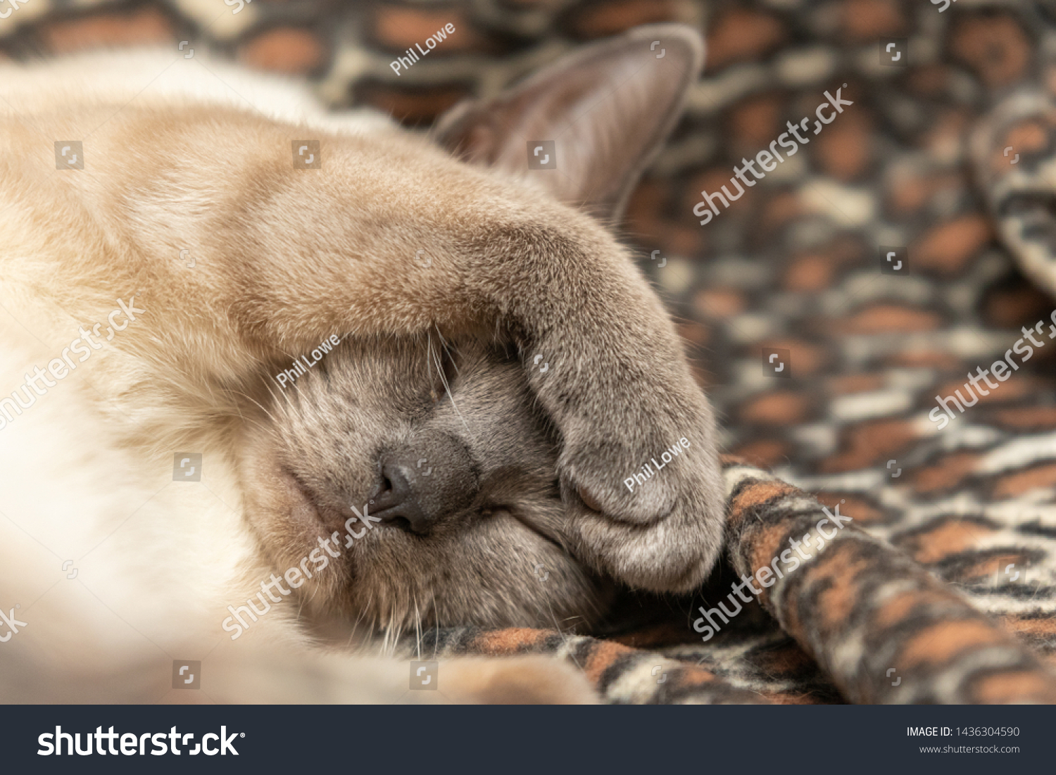 stock-photo-close-up-of-a-cute-sleeping-