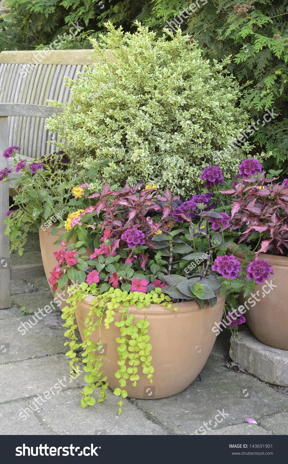 Arrangement Of Plants And Flowers In Spring Garden