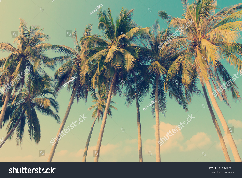 Vintage Palm 77