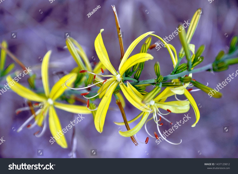 Wonderful Yellow Wild Flowers Kind Lily Stock Photo Edit Now
