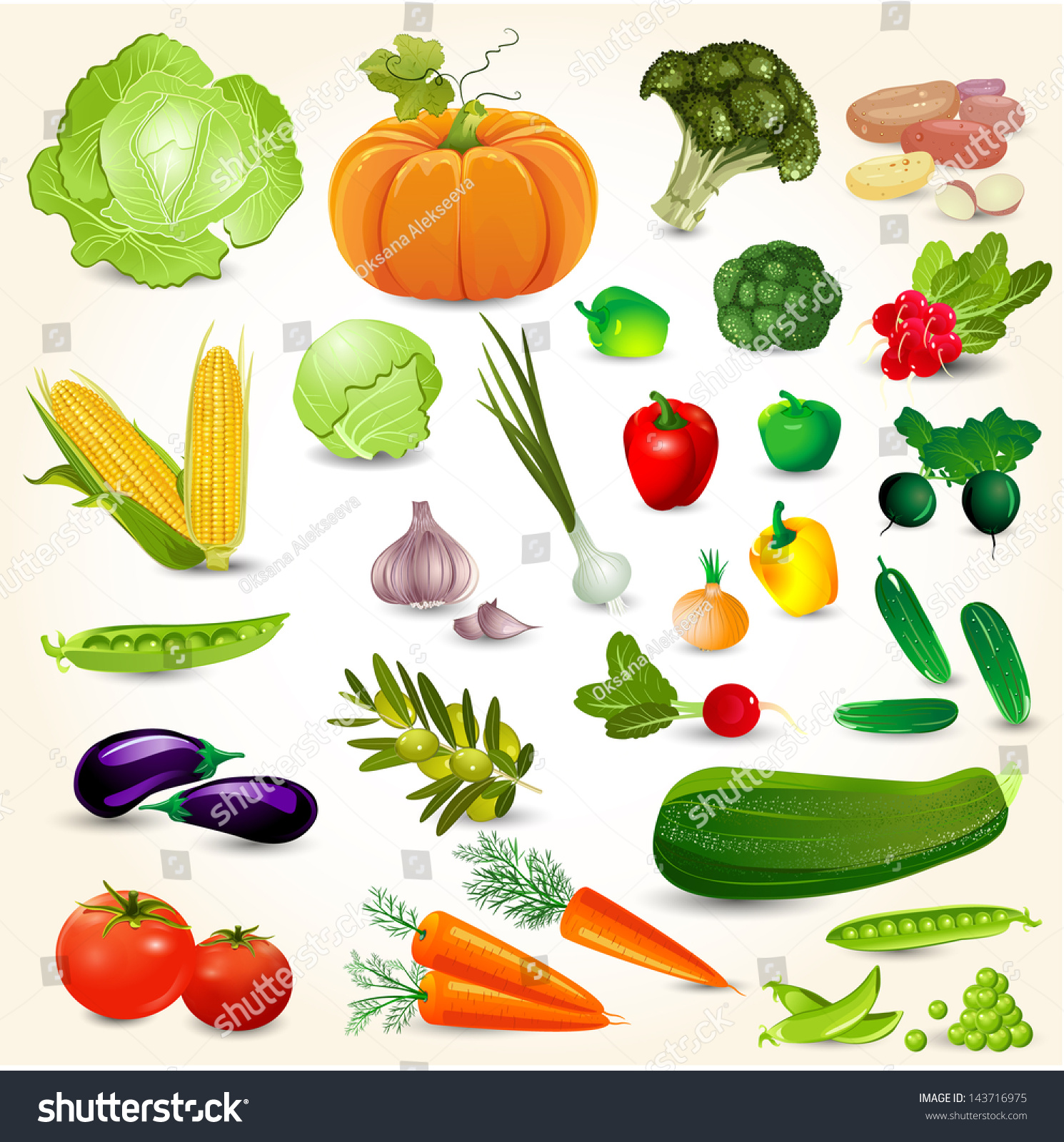 6d8b95f0f5d Set Fresh Vegetables Your Design Stock Vector (Royalty Free ...