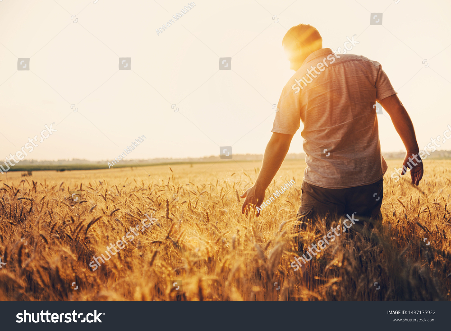 Silhouette of Man agronomist farmer in golden wheat field. Male holds ears of wheat in hand. #1437175922