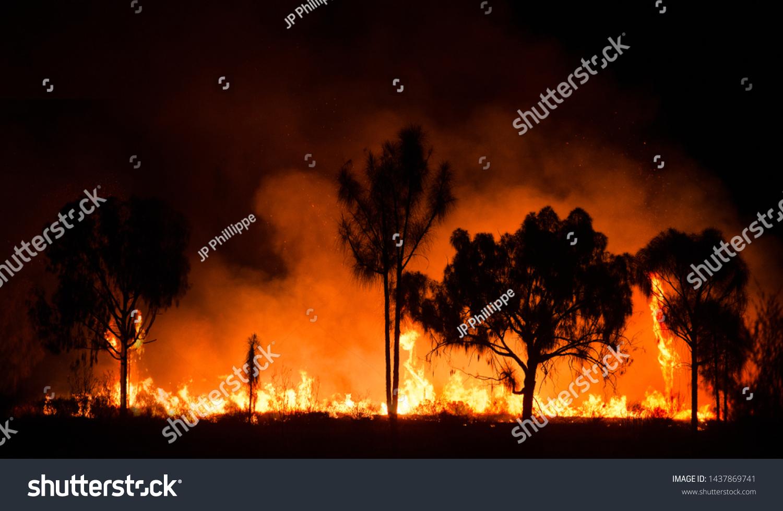 Bush fire In australian outback #1437869741