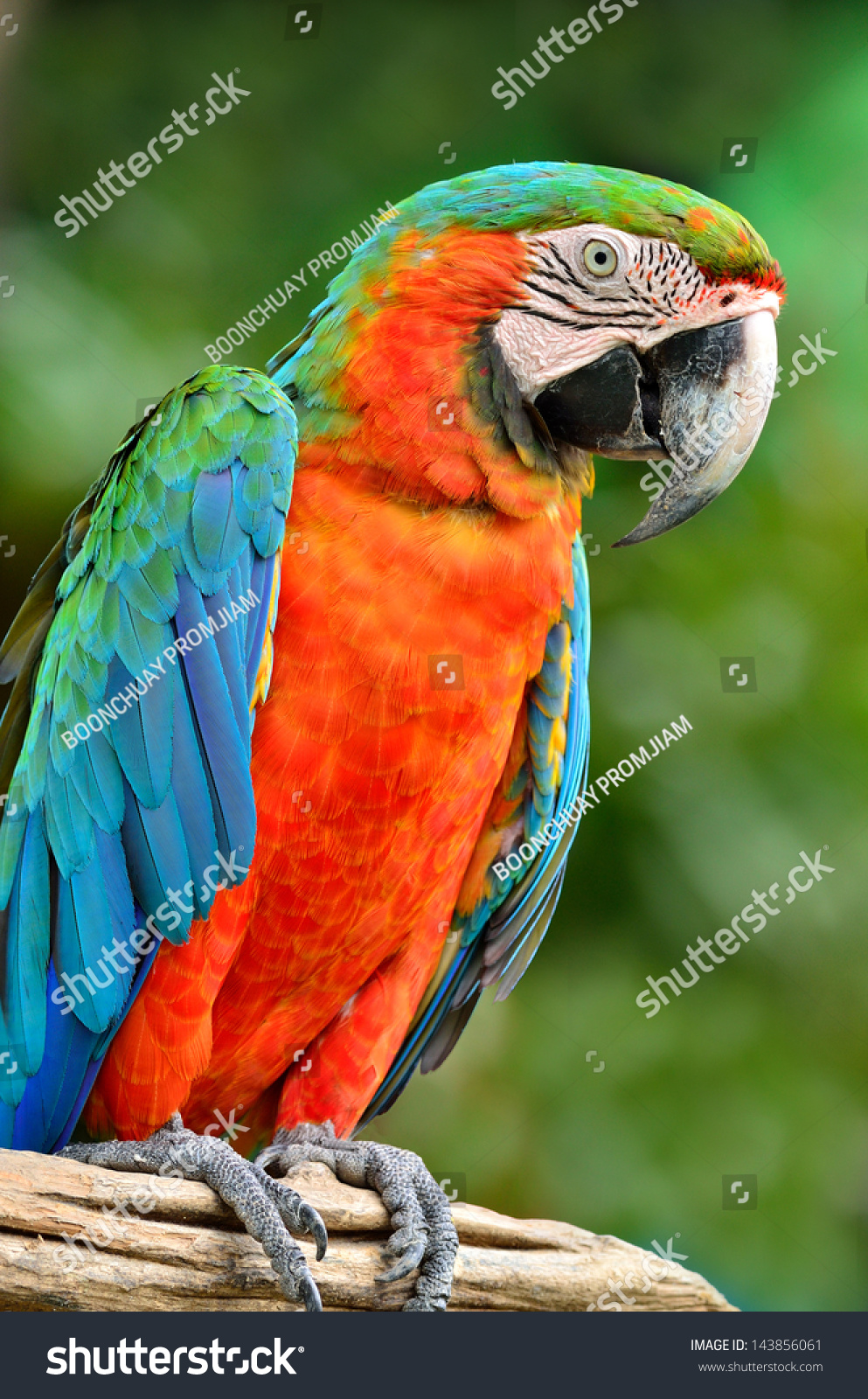117 best images about Parrots on Pinterest | Australian capital ...