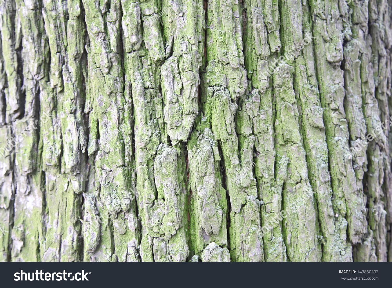 Tree Bark Texture Stock Photo & Image (Royalty-Free) 143860393 ...