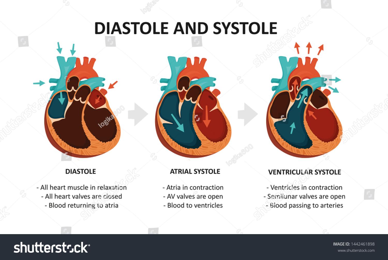 magas systole alacsony diastole