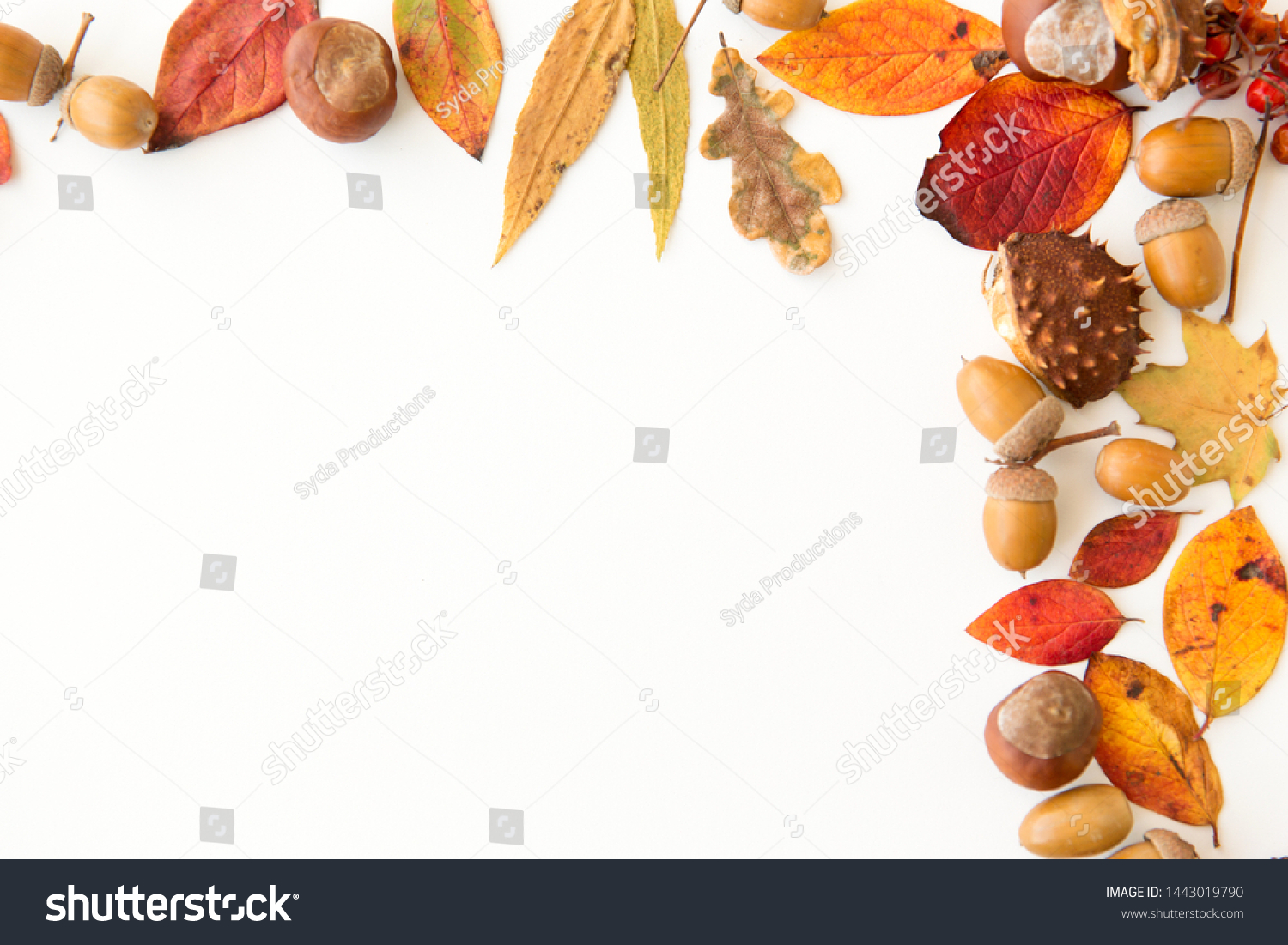 nature, season and botany concept - frame of different dry fallen autumn leaves, chestnuts, acorns and berries on white background #1443019790