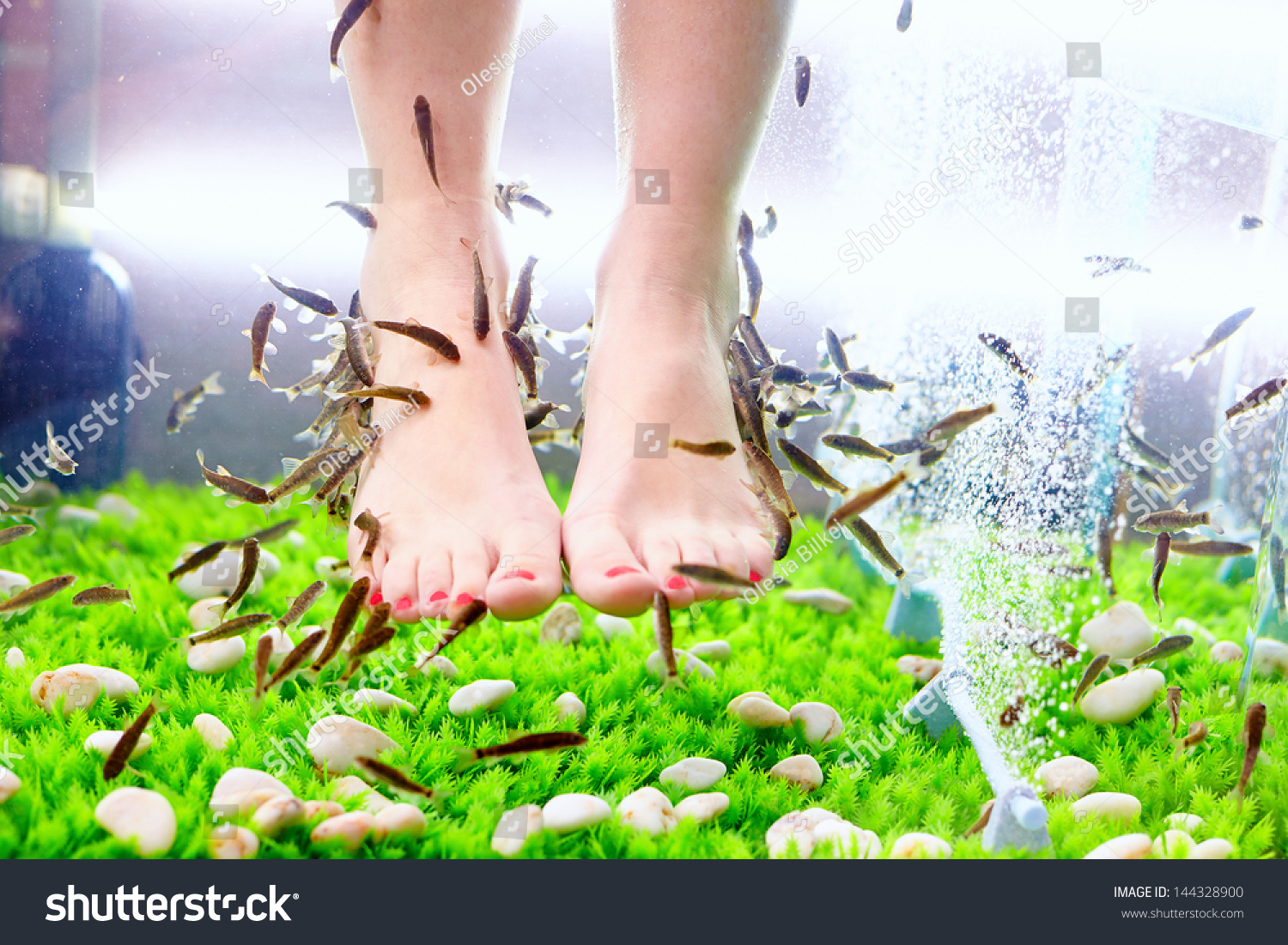 Fish pedicure spa treatment rufa garra fish stock photo for Fish spa treatment
