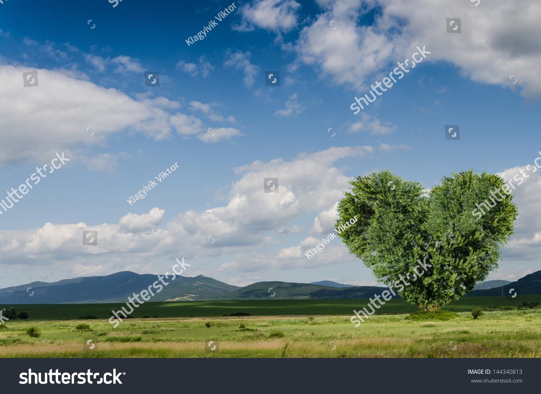 Kok Askim : Green Field Heart Tree Stok Fotografi 144340813  Shutterstock