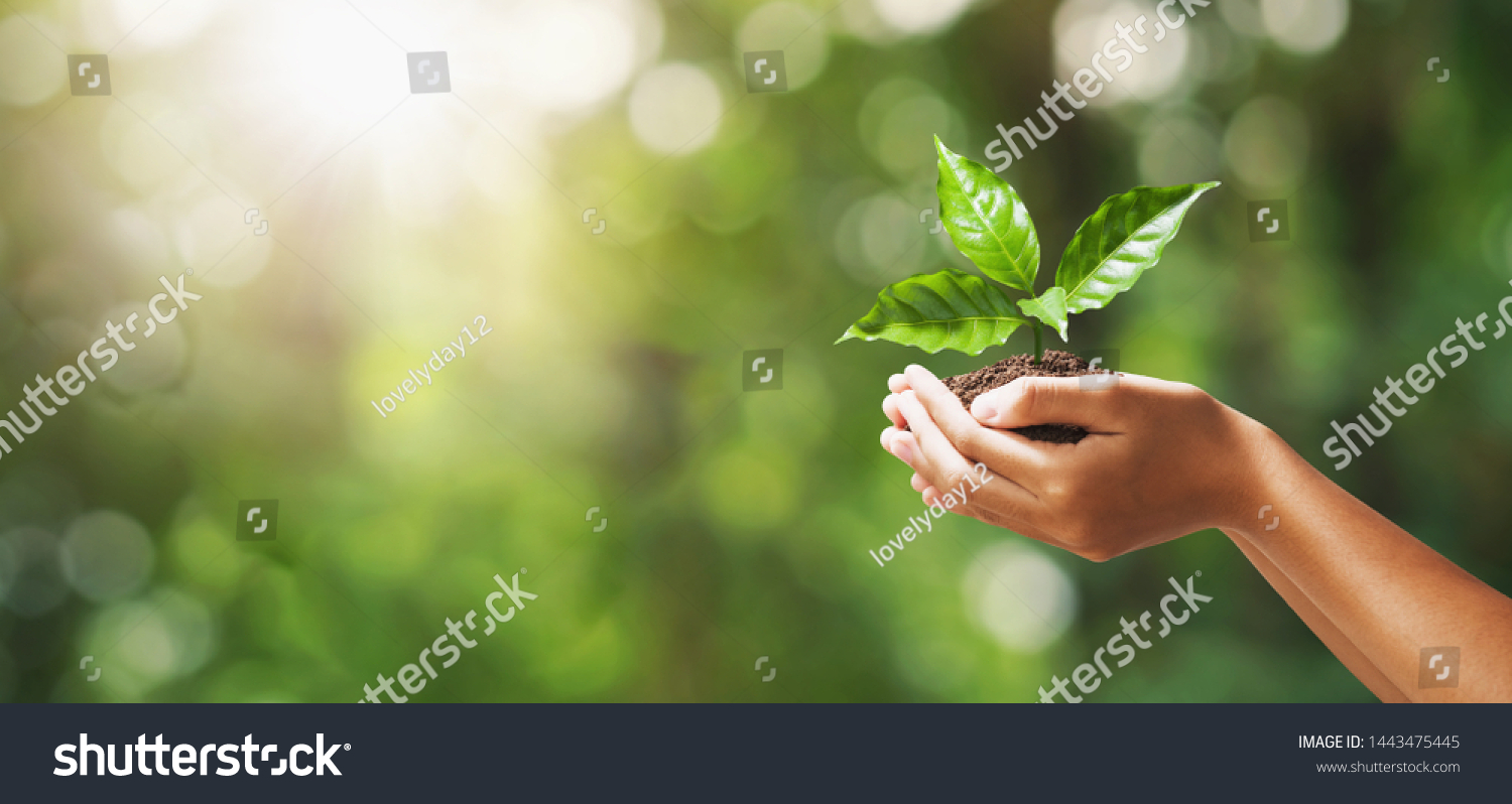 hand holding young plant on blur green nature background. concept eco earth day #1443475445