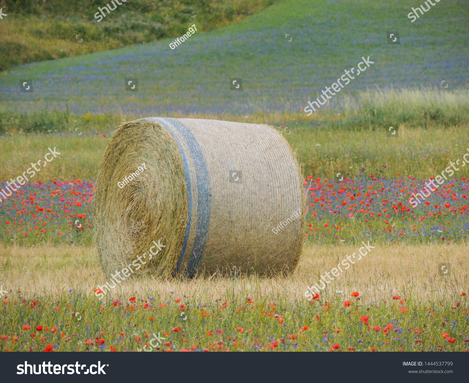 Isolated bale of hay in the cultivated fields during the summer.