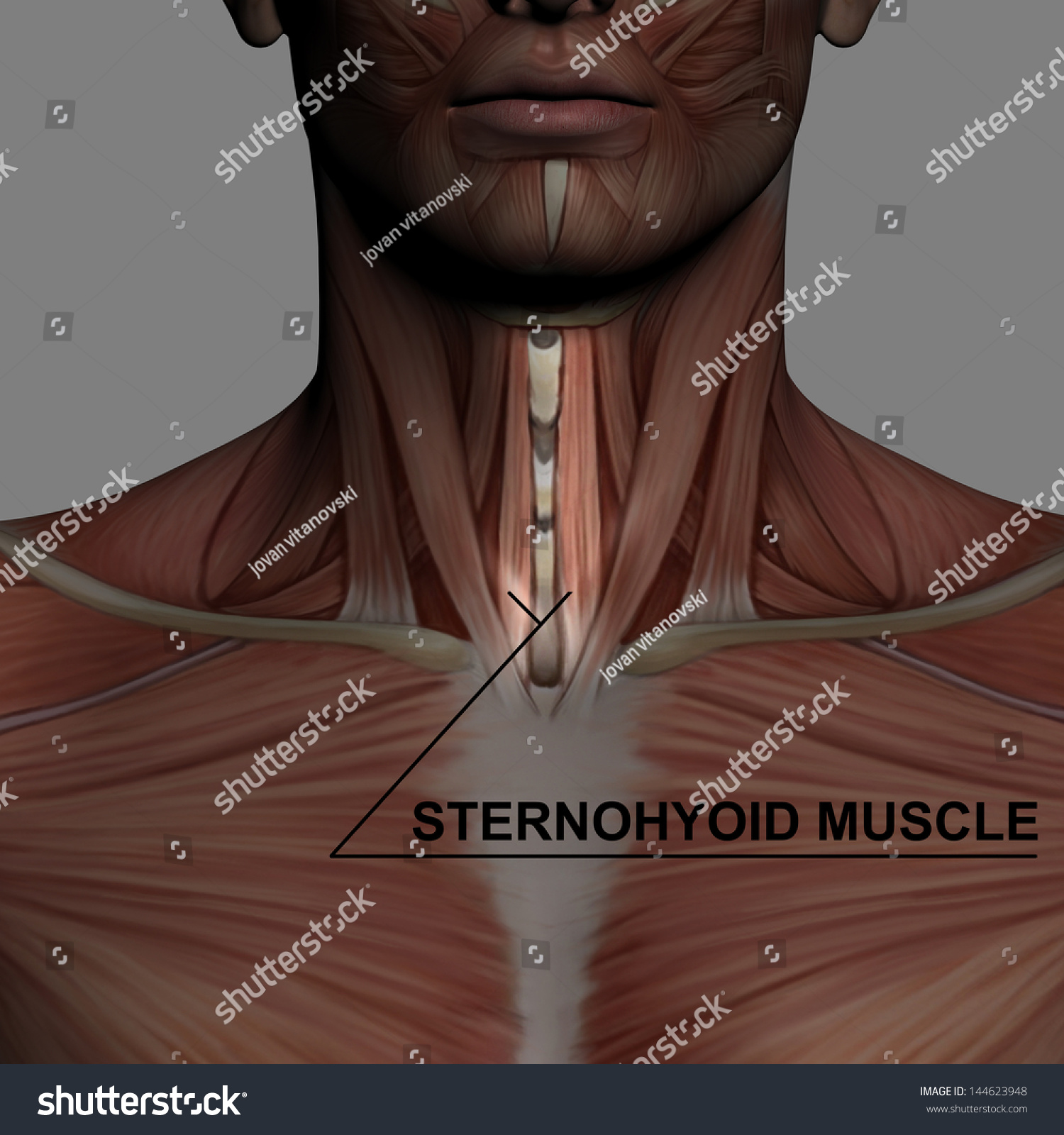 Human Anatomy Male Muscles Made 3 D Stock Illustration 144623948 ...