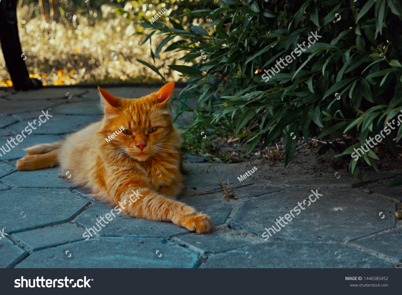 stock-photo-orange-tom-cat-resting-in-th