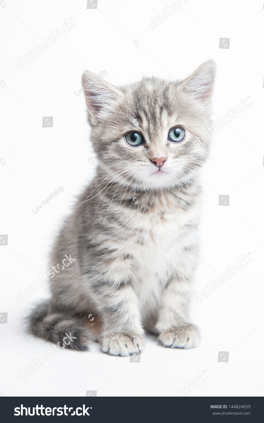 Grey With Black Striped Cat Names