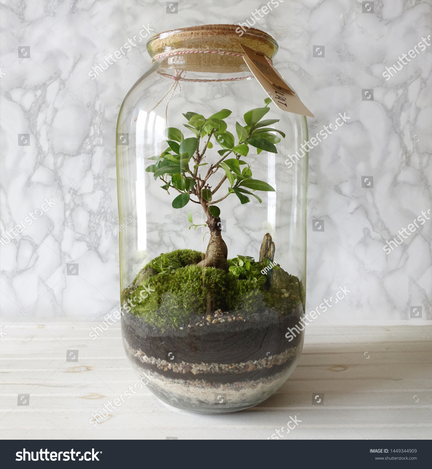 Small Decoration Plants Glass Bottlegarden Terrarium Stock Photo Edit Now 1449344909