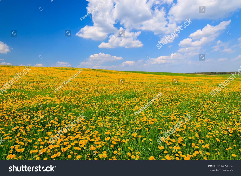 Yellow flowers field rural landscape white stock photo 100 legal yellow flowers field rural landscape white clouds blue sky hamerlberg burgenland austria mightylinksfo