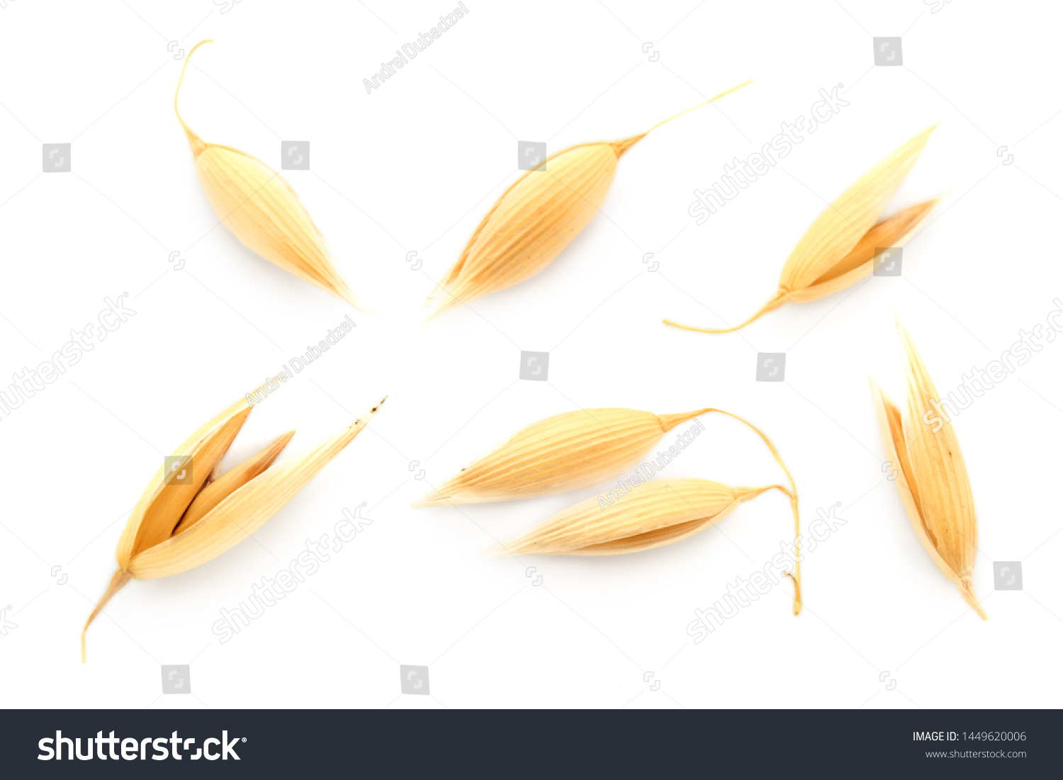 Oat seeds are isolated on white with a shadow. Oat seeds isolated on a white background. Set of oat grains isolated on white background. Top view of oat grains. #1449620006