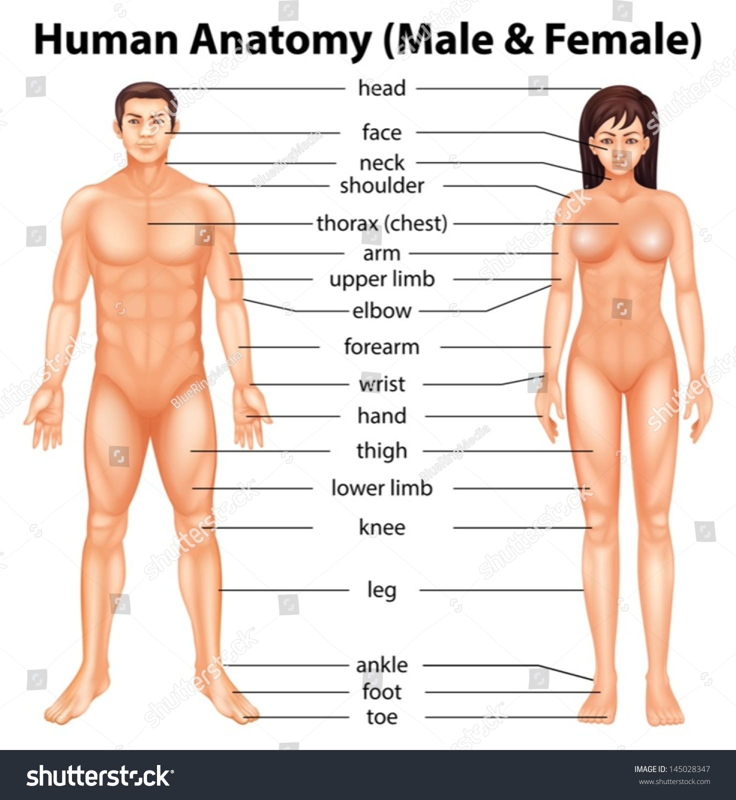 Female Human Body Images Stock Photos amp Vectors