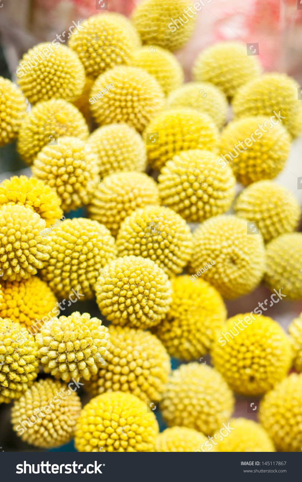 Yellow Ball Flowers Stock Photo Image Royalty Free 145117867