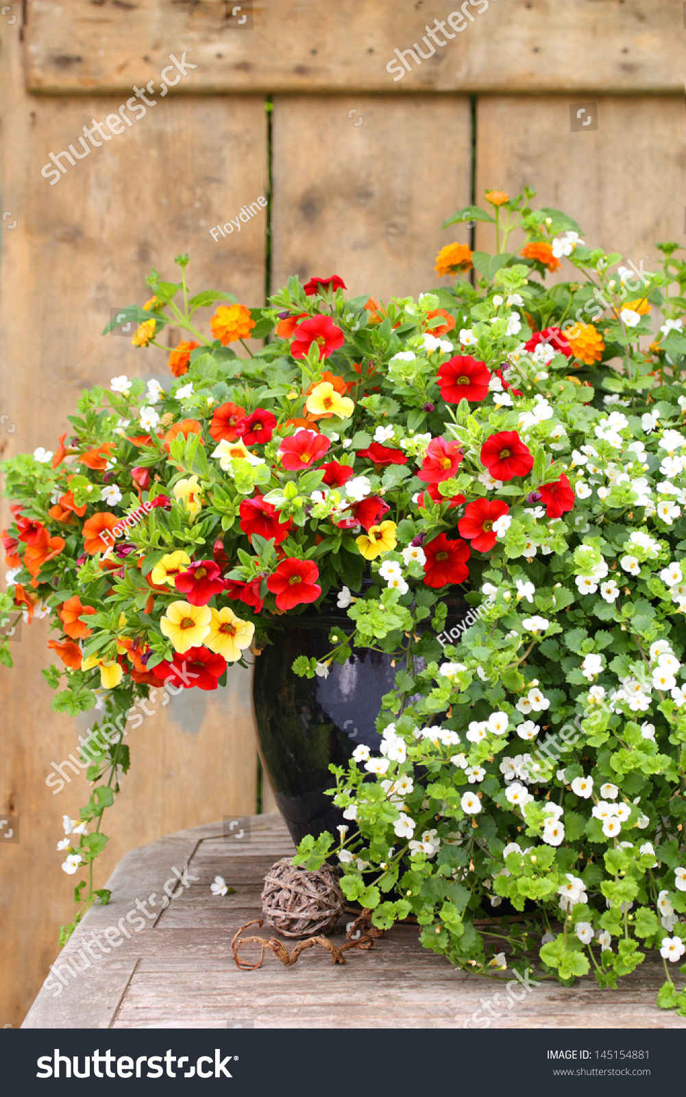 Beautiful Potted Flowers On Rustic Garden Stock Photo Royalty Free