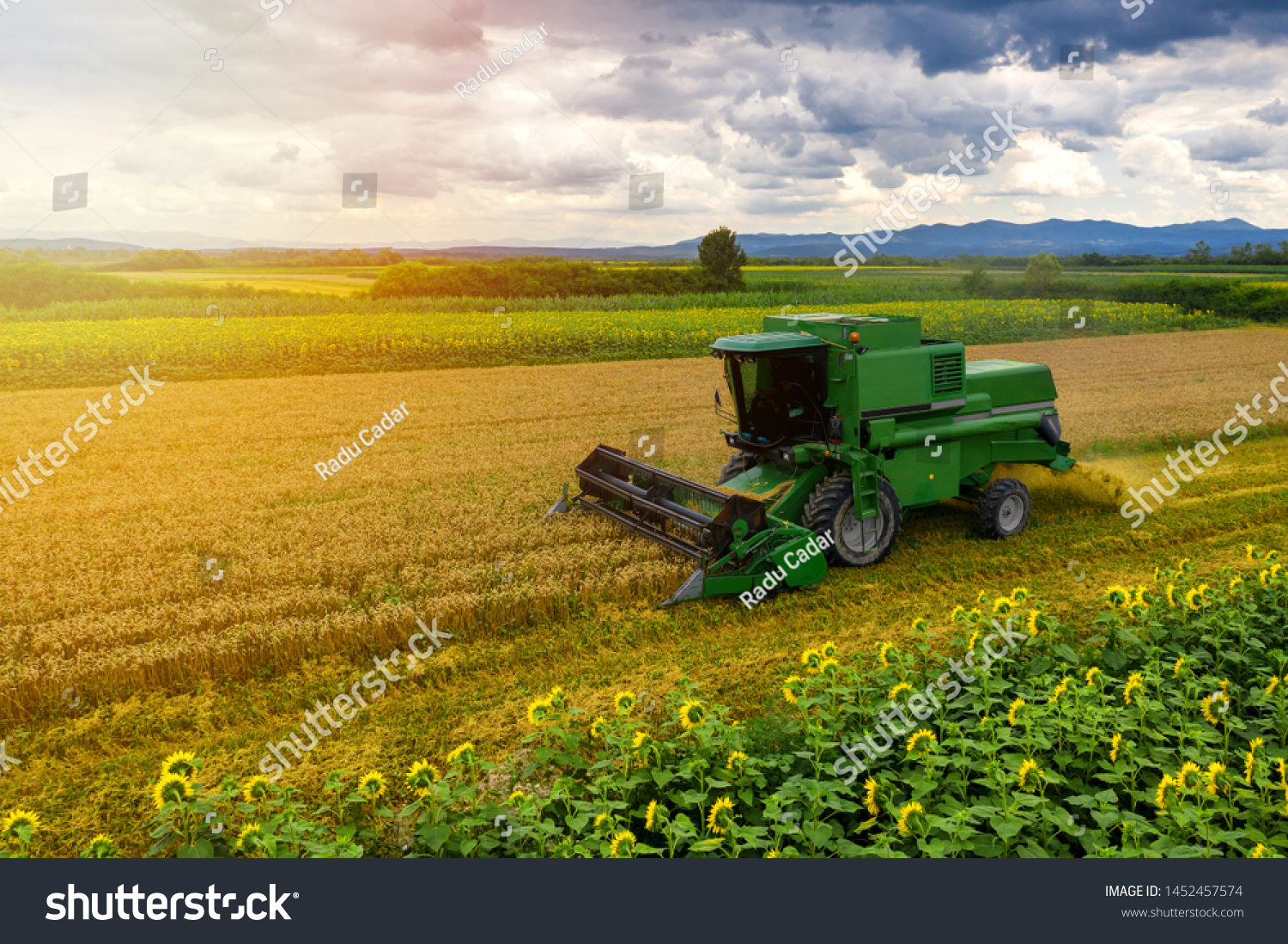 Harvester machine to harvest wheat field working. Combine harvester agriculture machine harvesting golden ripe wheat field. Agriculture aerial view