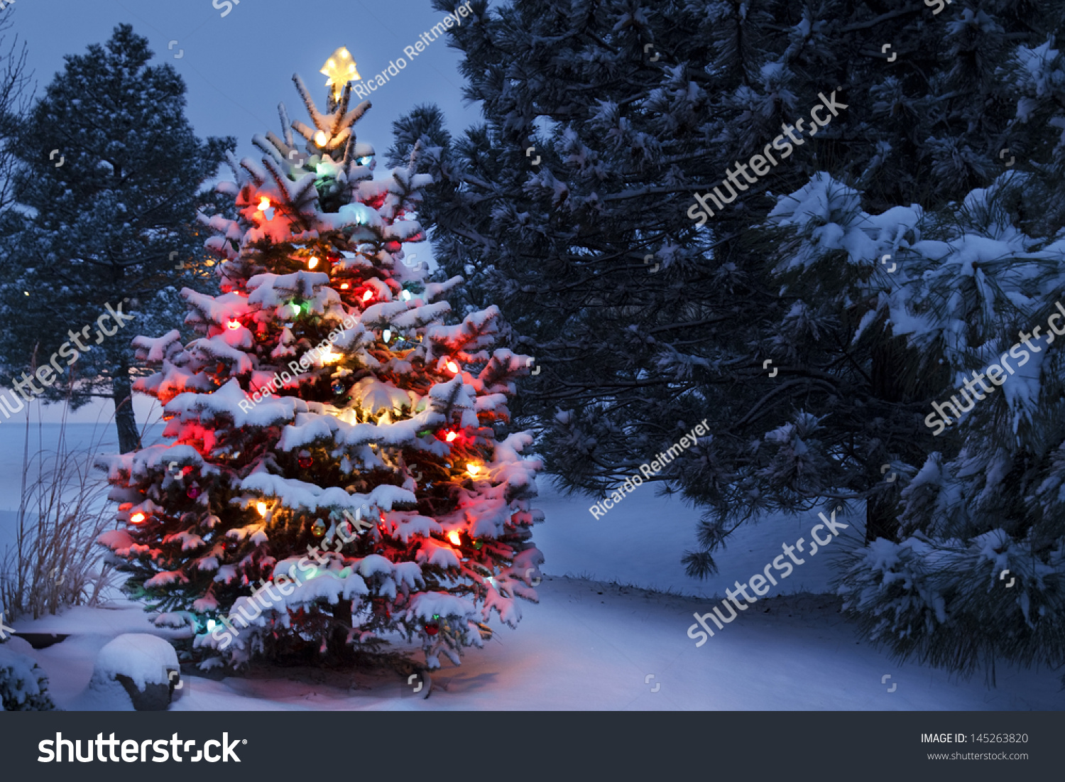 This snow covered christmas tree stands stock photo