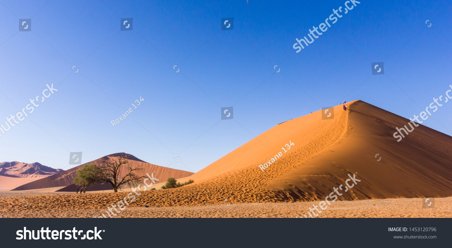 famous and iconic African landscape scene of dune 45 in Namib Naukluft national park in Namibia, Africa with people climbing up the huge sand dune on a cloudless Winter day in the desert environment