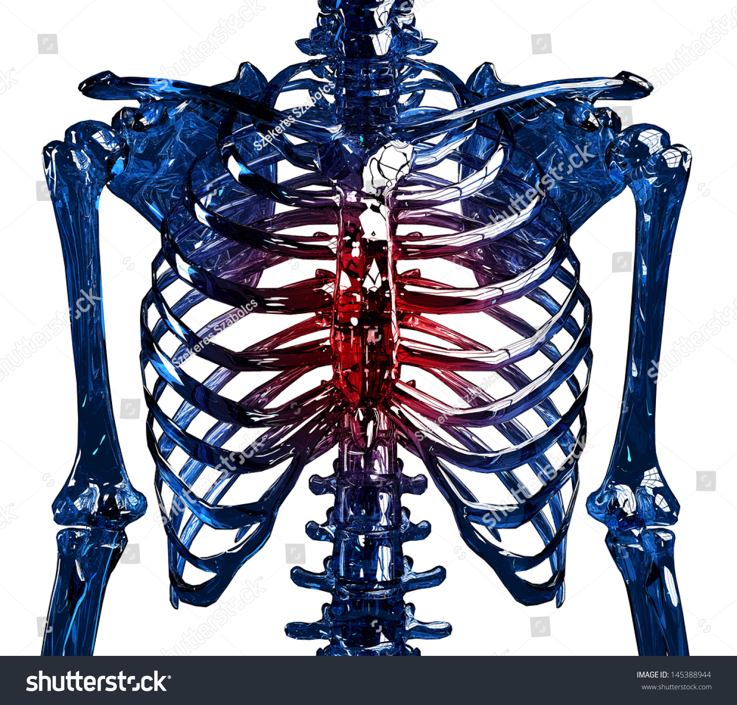 Frontal View Human Glass Skeleton Chest Stock Illustration 145388944