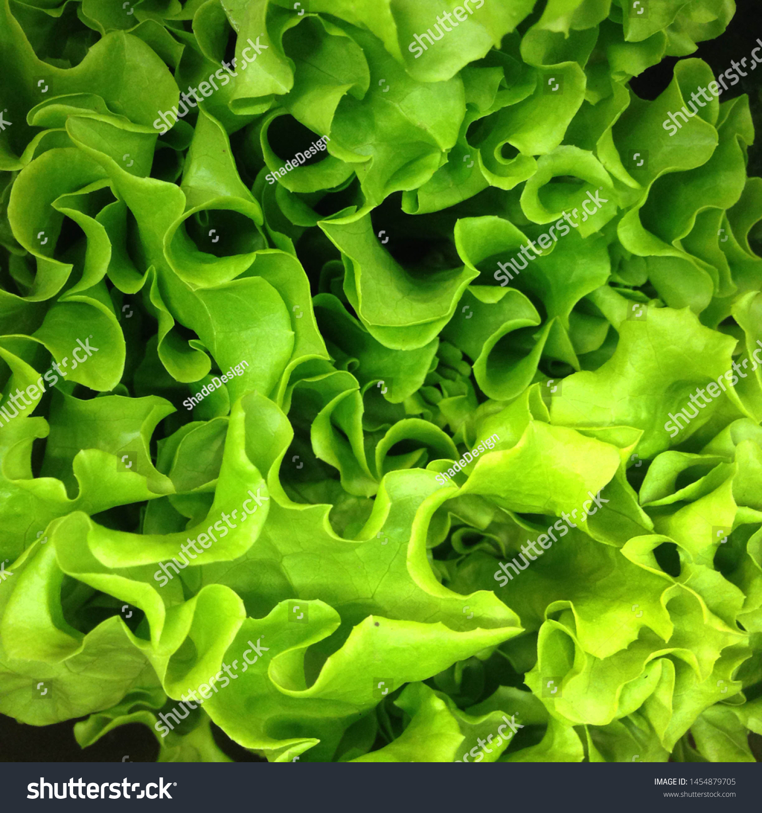 Macro Photo food vegetable green  salad. Texture background fresh mixed  Lettuce green  salad. Product Image Vegetable green salad #1454879705
