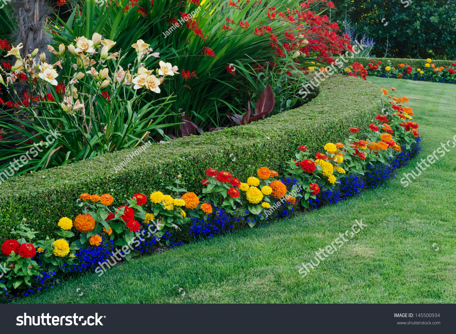 Beautiful Garden Display Featuring Curved Boxwood Stock Photo (Edit on
