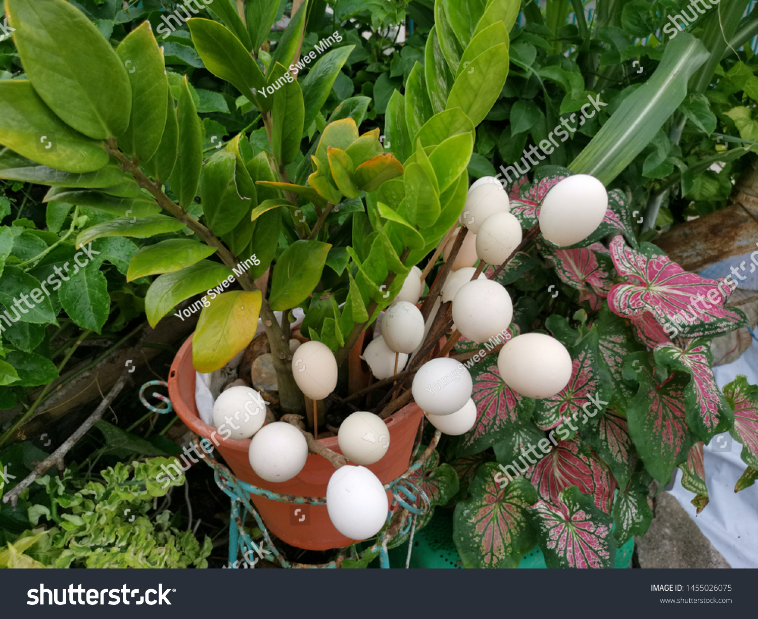 Empty Eggs Shell Use Decorate Garden Stock Photo (Edit Now) 10