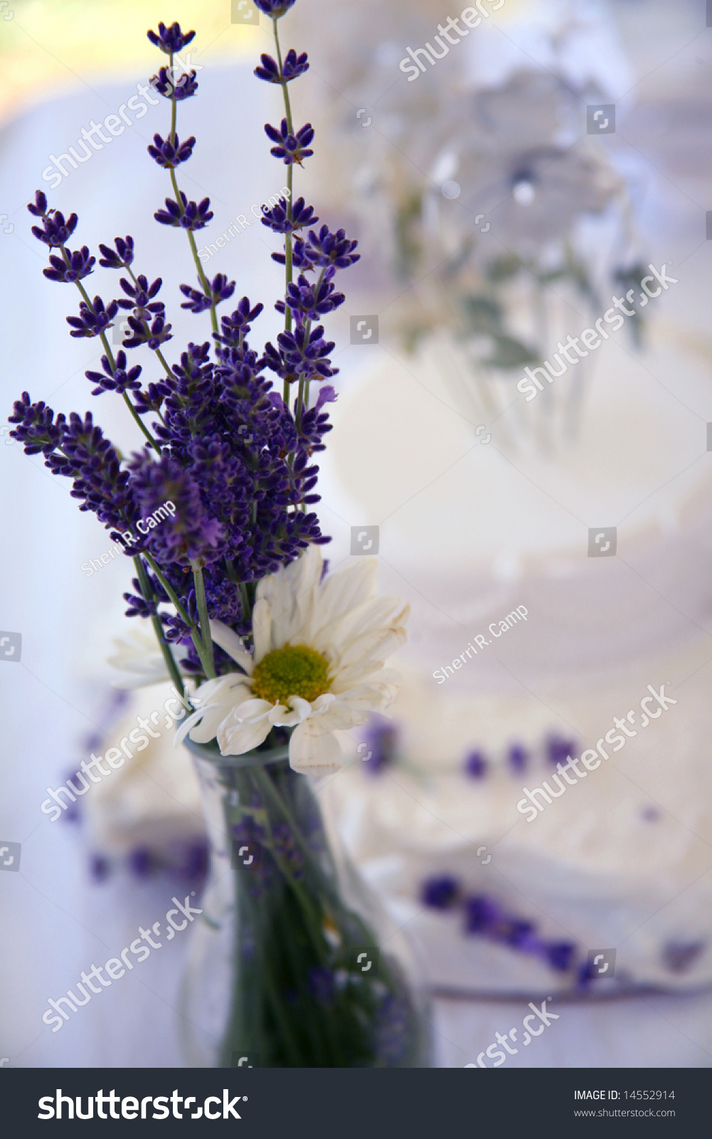 Lavender Daisies Wedding Flowers Stock Photo Edit Now 14552914